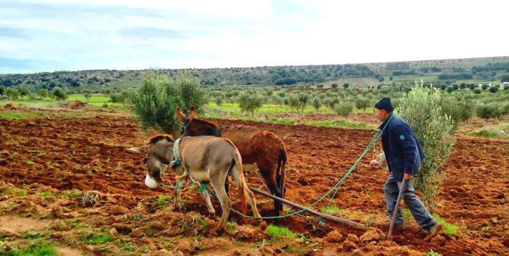تأثير المستثمرين على التنظيم الاجتماعي لفلاحي أراضي الاصلاح الزراعي