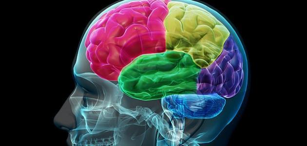 لأول مرة.. الأمريكيون يدخلون مخ الإنسان لتنظيم مزاجه
