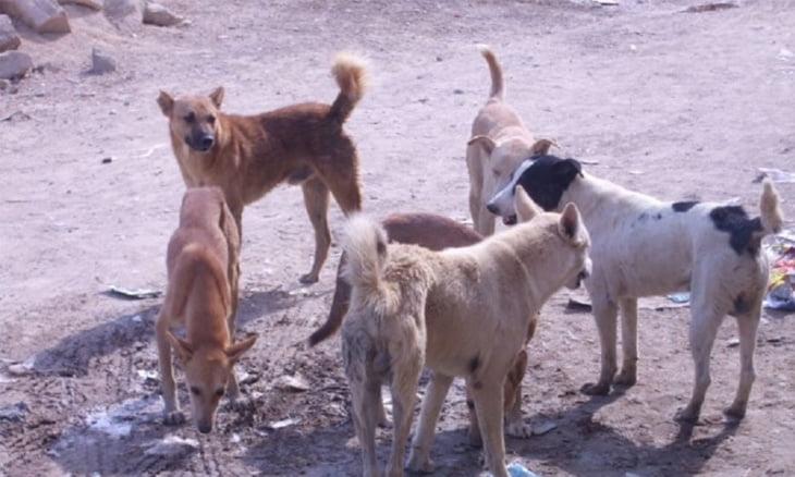 هجوم الكلاب الضالة يرعب ساكنة جماعة نواحي مراكش