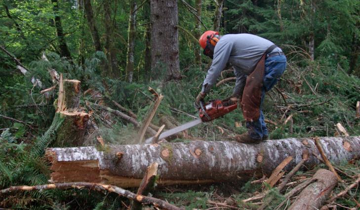 عصابات قطع الأشجار والصيد تستنفر مندوبية المياه والغابات