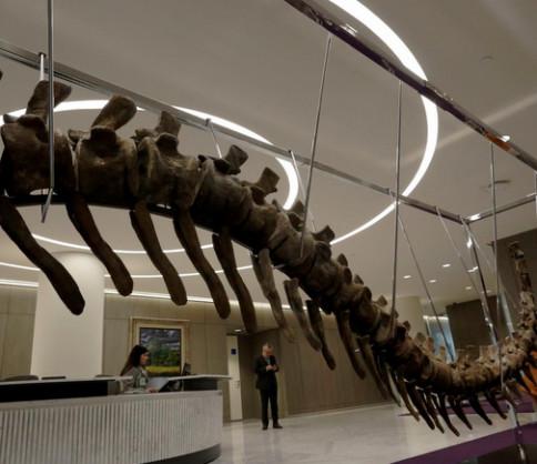 مزاد علني لذيل ديناصور مغربي من أجل إعمار المكسيك