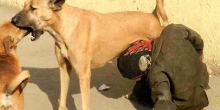 وزارة الداخلية توضح حقيقة صورة طفل متشرد يرضع ثدي كلبة ضالة
