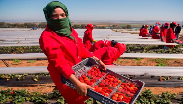 فرص عمل.. إسبانيا تطلب 10 آلاف عاملة مغربية للعمل في الحقول