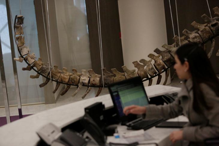 وزارة الطاقة والمعادن تكشف عن تحرياتها بخصوص بيع ذيل ديناصور مغربي
