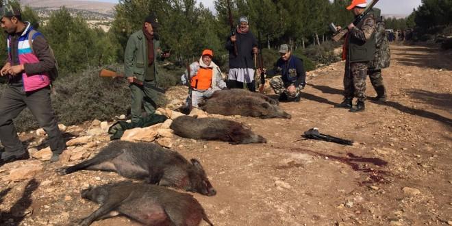 مندوبية الغابات تقتل أزيد من 53 ألف خنزير للحفاظ على التنوع البيولوجي
