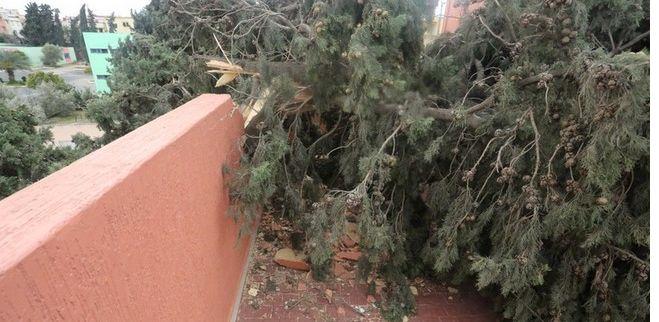 بالصور ...الرياح تتسسب في خسائر كبيرة في مكناس