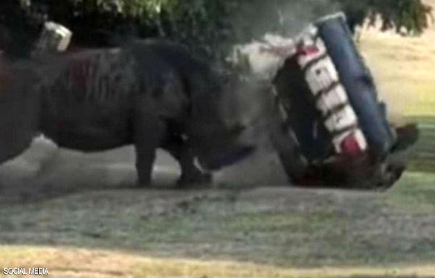 """""""وكأنها كرة صغيرة"""".. وحيد قرن يعبث بسيارة تقودها امرأة"""