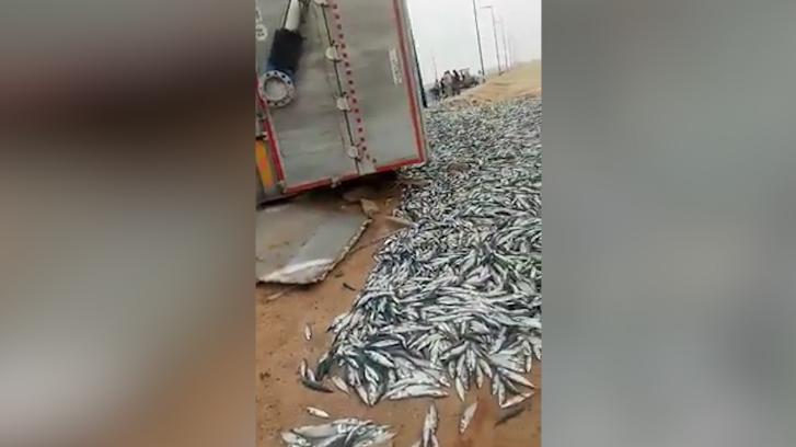بالفيديو.. ضياع أطنان من سمك السردين بمدخل ميناء الداخلة