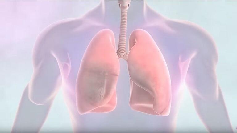 اليوم العالمي لمكافحته: كيف نحمي أنفسنا من سرطان الرئة..؟