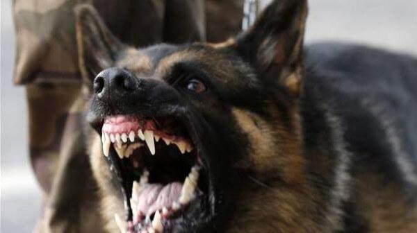 خطير.. كلاب مفترسة تنهش جسد طفلة بورزازات