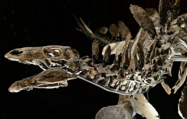 """العثور بالمغرب على رفات أقدم ديناصور """"ستيغوصورس"""" في العالم + صور"""