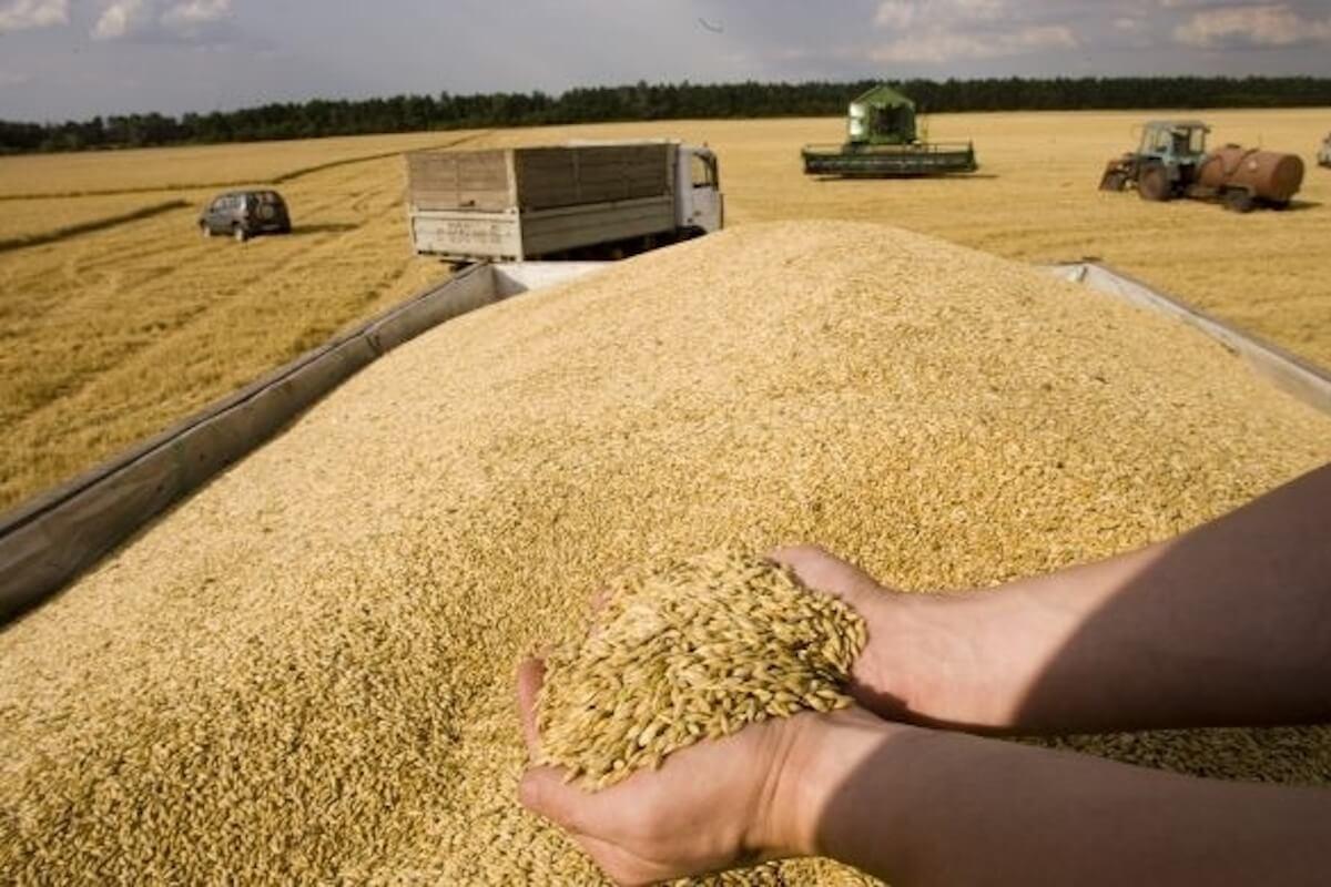الحكومة تُخفض رسوم استيراد  القمح اللين ومشتقاته