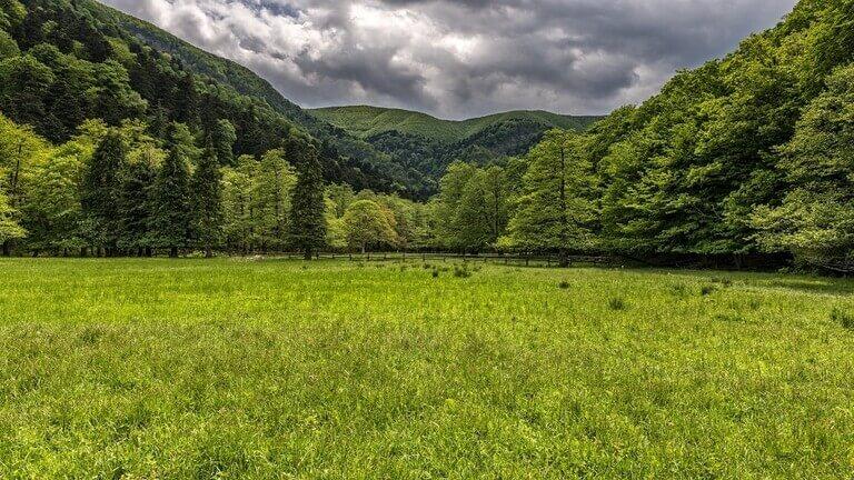 ظاهرة خطرة تهدد الغابات والمروج