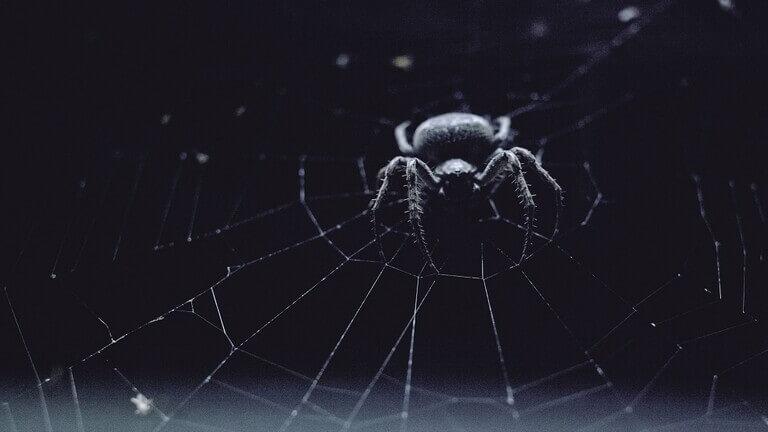 """نوع جديد من العناكب """"يعفّن"""" لحم البشر ويختبئ في الأثاث!"""