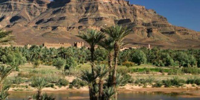 """""""غرينبيس"""" تطلق حملة لحماية الواحات المغربية من الزوال"""