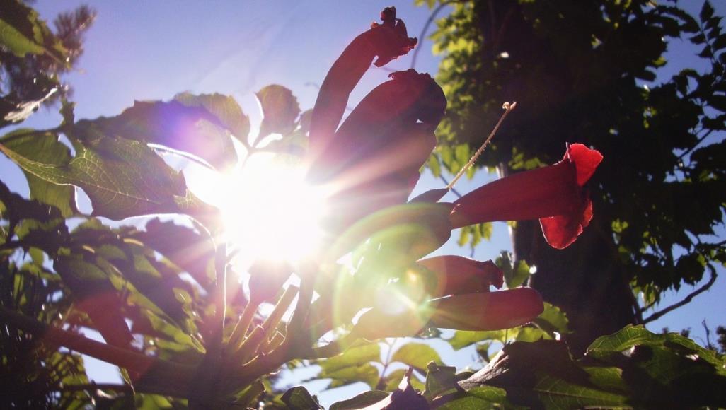 كيف تحمي النباتات نفسها من أضرار أشعة الشمس؟