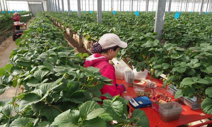 آلاف العاملات الزراعيات في اسبانيا ينتظرن العودة إلى المغرب
