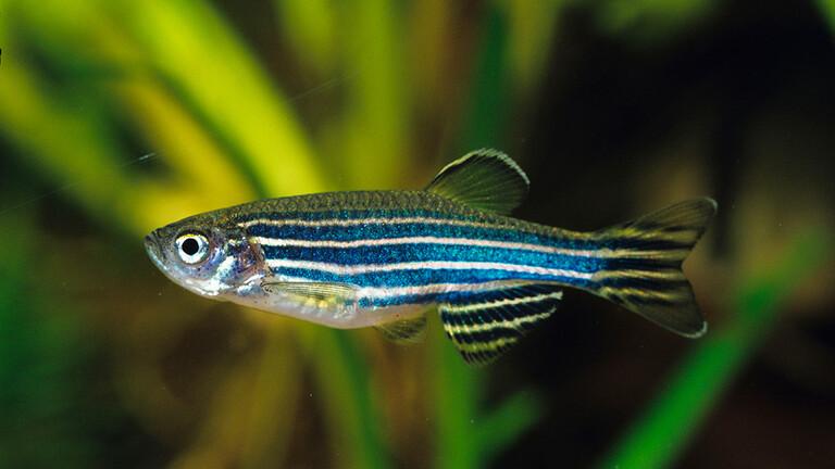 علماء الأحياء: الأسماك تعاني من الكآبة واليأس