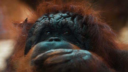 اكتشاف بقايا أقدم حيوان رئيسي في العالم يعود تاريخها لنحو 66 مليون سنة!
