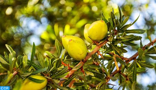 المجتمع الدولي يحتفي باليوم العالمي الأول لشجرة الأركان
